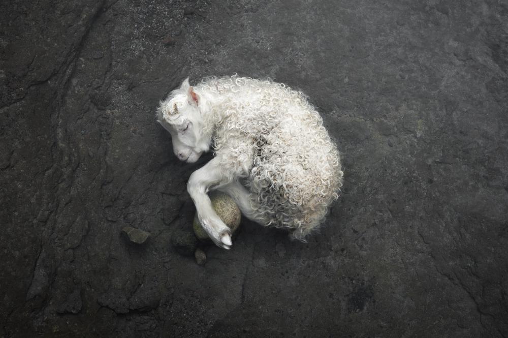Ventre gris